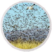 Blackbirds And Geese Round Beach Towel