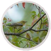 Blackpoll Warbler In The Fall Round Beach Towel