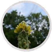 Round Beach Towel featuring the photograph Blended Golden Rod Crab Spider On Mullein Flower by Neal Eslinger