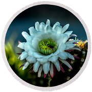 Blooming Argentine Giant Round Beach Towel