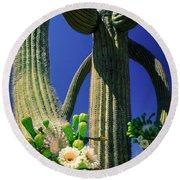 Blooming Saguaro Round Beach Towel