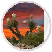 Full Blooming Yucca Round Beach Towel by Jack Pumphrey
