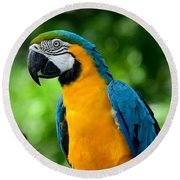 Blue And Yellow Gold Macaw Parrot Round Beach Towel