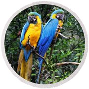 Blue And Yellow Macaws Round Beach Towel