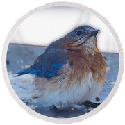 Blue Bird 4 Round Beach Towel