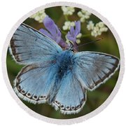 Blue Butterfly Round Beach Towel by Ron Harpham