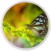 Blue Butterfly With Beautiful Colors Round Beach Towel