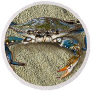 Blue Crab Confrontation Round Beach Towel by Sandi OReilly
