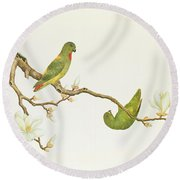 Blue Crowned Parakeet Hannging On A Magnolia Branch Round Beach Towel