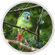 Blue Crowned Parakeet Round Beach Towel