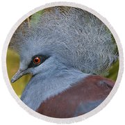 Blue-crowned Pigeon Round Beach Towel by David Millenheft