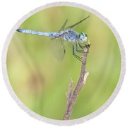 Round Beach Towel featuring the photograph Blue Dasher by Bryan Keil