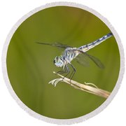 Round Beach Towel featuring the photograph Blue Dasher On The Edge by Bryan Keil