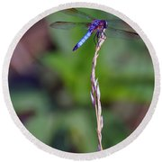 Blue Dragonfly On A Blade Of Grass  Round Beach Towel