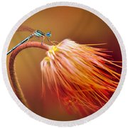 Blue Dragonfly On A Dry Flower Round Beach Towel