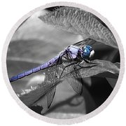 Blue Eyed Dragonfly Round Beach Towel