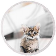 Blue Eyed Kitten Round Beach Towel by Shelby  Young