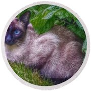 Round Beach Towel featuring the photograph Blue Eyes - Signed by Hanny Heim