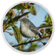 Blue-gray Gnatcatcher Round Beach Towel