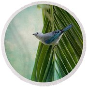 Blue Grey Tanager On A Palm Tree Round Beach Towel