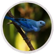 Blue Grey Tanager Round Beach Towel by Chris Flees