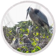 Round Beach Towel featuring the photograph Blue Heron Family by Ron Davidson