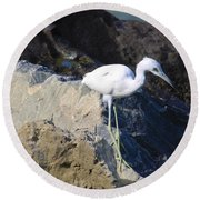 Round Beach Towel featuring the photograph Blue Heron Squared by Chris Thomas