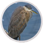 Blue Herron Round Beach Towel