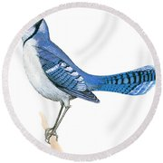 Blue Jay  Round Beach Towel by Anonymous
