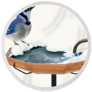 Blue Jay At Heated Birdbath Round Beach Towel by Steve and Dave Maslowski