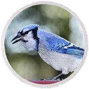 Blue Jay Bird Round Beach Towel by Elena Elisseeva