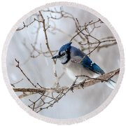 Blue Jay In Blowing Snow Round Beach Towel by Debbie Green
