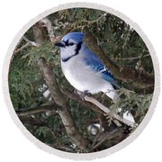 Round Beach Towel featuring the photograph Blue Jay In The Cedars by Brenda Brown