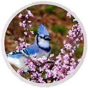 Blue Jay In The Pink Round Beach Towel