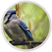 Blue Jay On A Misty Spring Day Round Beach Towel by Lois Bryan