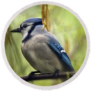 Blue Jay On A Misty Spring Day - Square Format Round Beach Towel by Lois Bryan