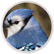 Blue Jay Profile Round Beach Towel by MTBobbins Photography