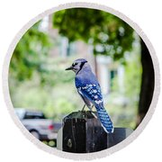 Round Beach Towel featuring the photograph Blue Jay by Sennie Pierson