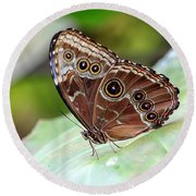 Round Beach Towel featuring the photograph Blue Morpho Butterfly by Teresa Zieba