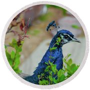 Blue Peacock Green Plants Round Beach Towel by Jonah  Anderson
