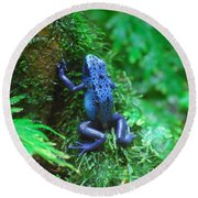 Blue Poison Dart Frog Round Beach Towel by DejaVu Designs