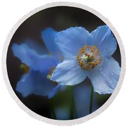 Round Beach Towel featuring the photograph Blue Poppy by Jacqui Boonstra
