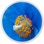 Blue Poppy Round Beach Towel