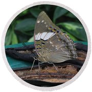 Blue-spotted Charaxes Butterfly Round Beach Towel