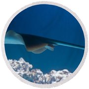 Round Beach Towel featuring the photograph Blue Spotted Fantail Ray by Eti Reid
