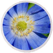 Blue Swan River Daisy Round Beach Towel by Tikvah's Hope