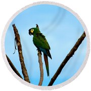 Blue-winged Macaw, Brazil Round Beach Towel