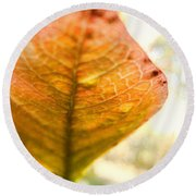 Blueberry Leaf In The Autumn Breeze Round Beach Towel by Louise Kumpf