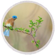 Bluebird Breeze Round Beach Towel