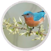 Bluebird Floral Round Beach Towel
